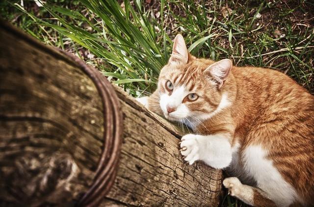 給貓戴上彩色項圈,或許就能救鳥一命