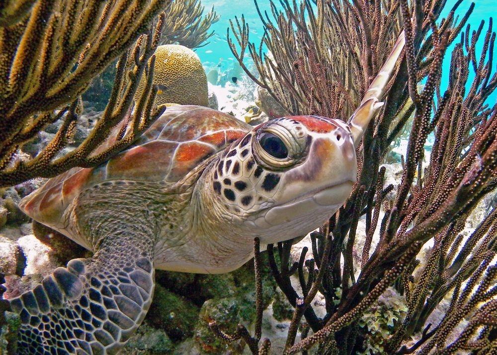 用12張珍貴照片慶祝「世界海龜日」!