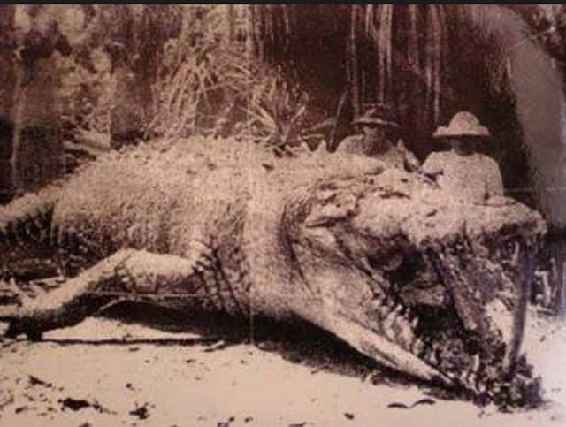 十項你不知道的鱷魚真相!(上)