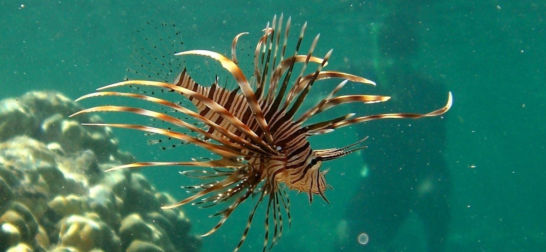 氣候變遷新警訊:有毒海洋動物大舉入侵