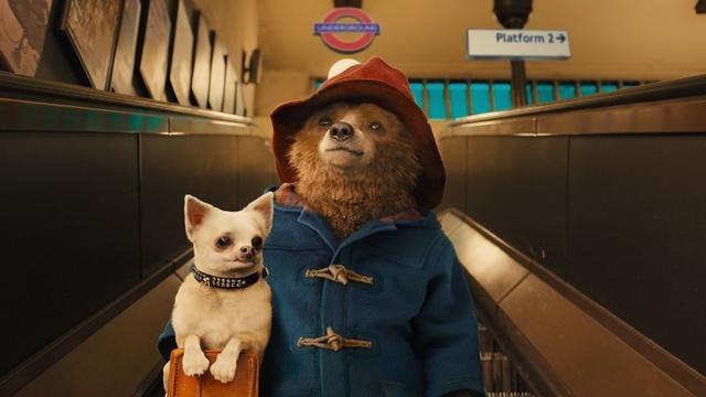 柏靈頓熊,到底是隻什麼熊?