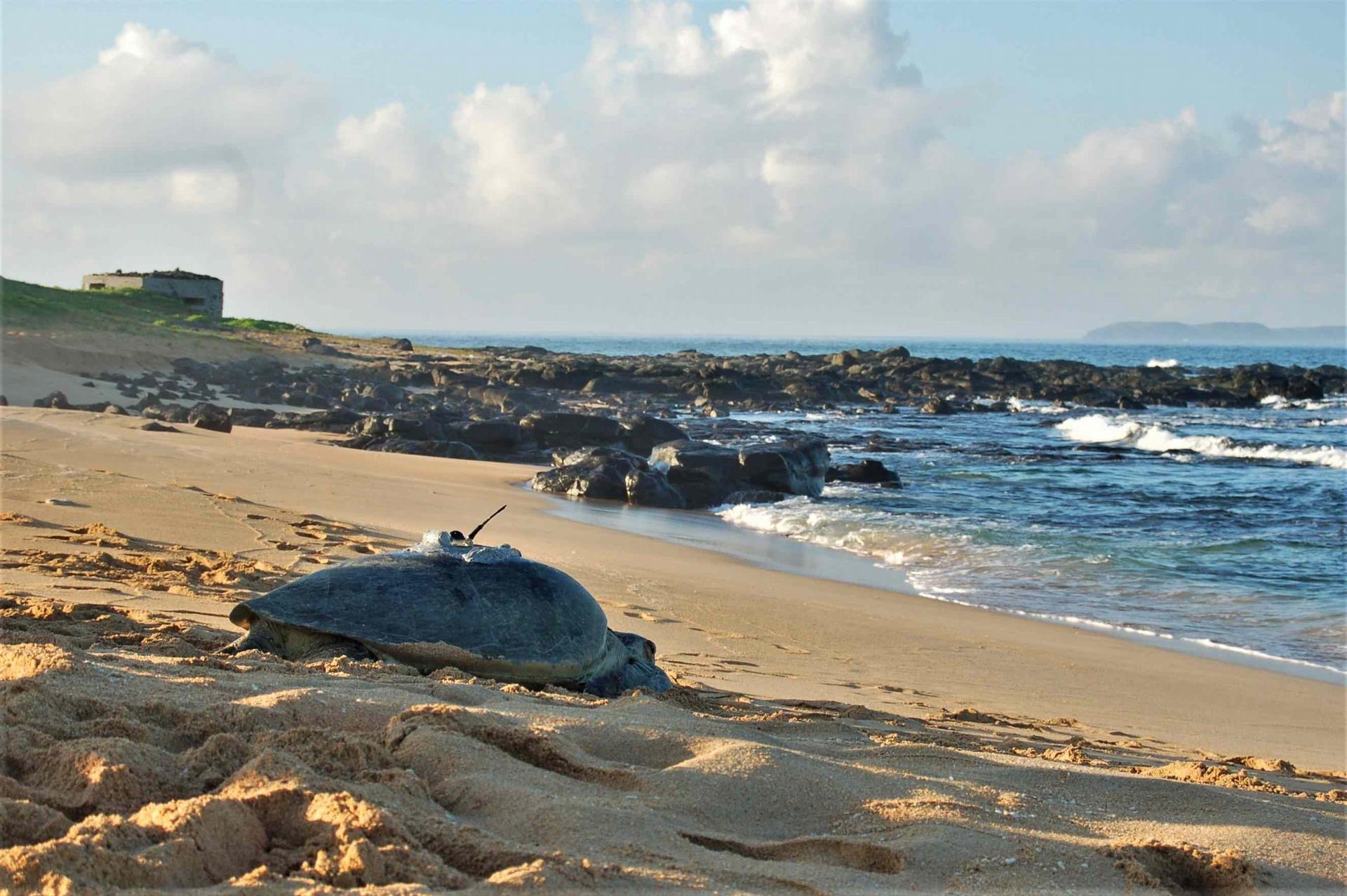 臺灣海龜的研究與發展