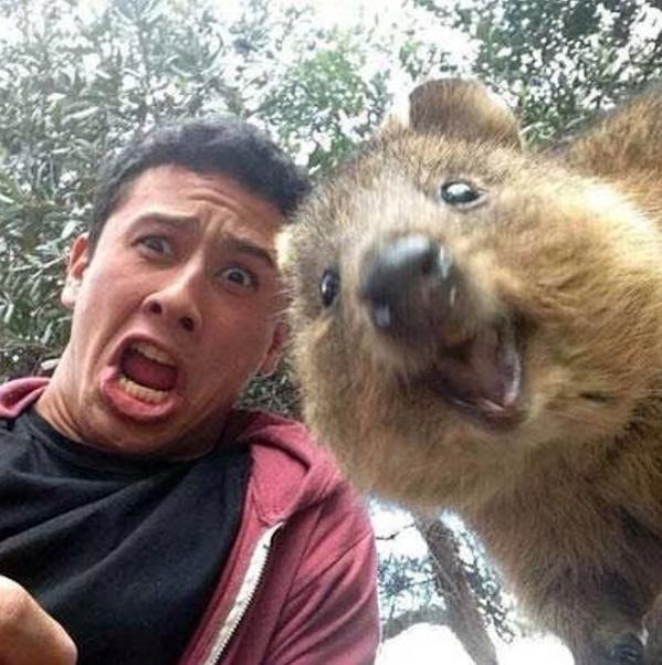 短尾矮袋鼠自拍:這種可愛的澳洲動物是怎麼回事?