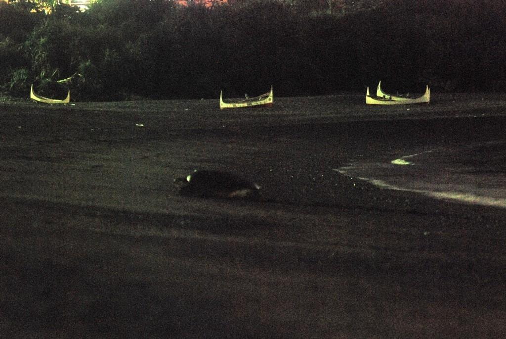 當海龜遇到光:用現代科技了解光汙染對海龜的影響