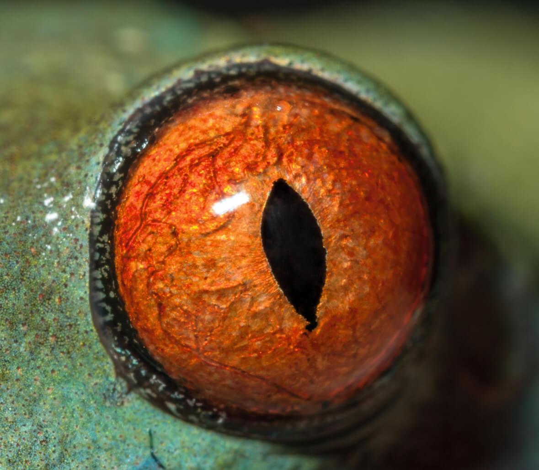 影像藝廊:大開眼界