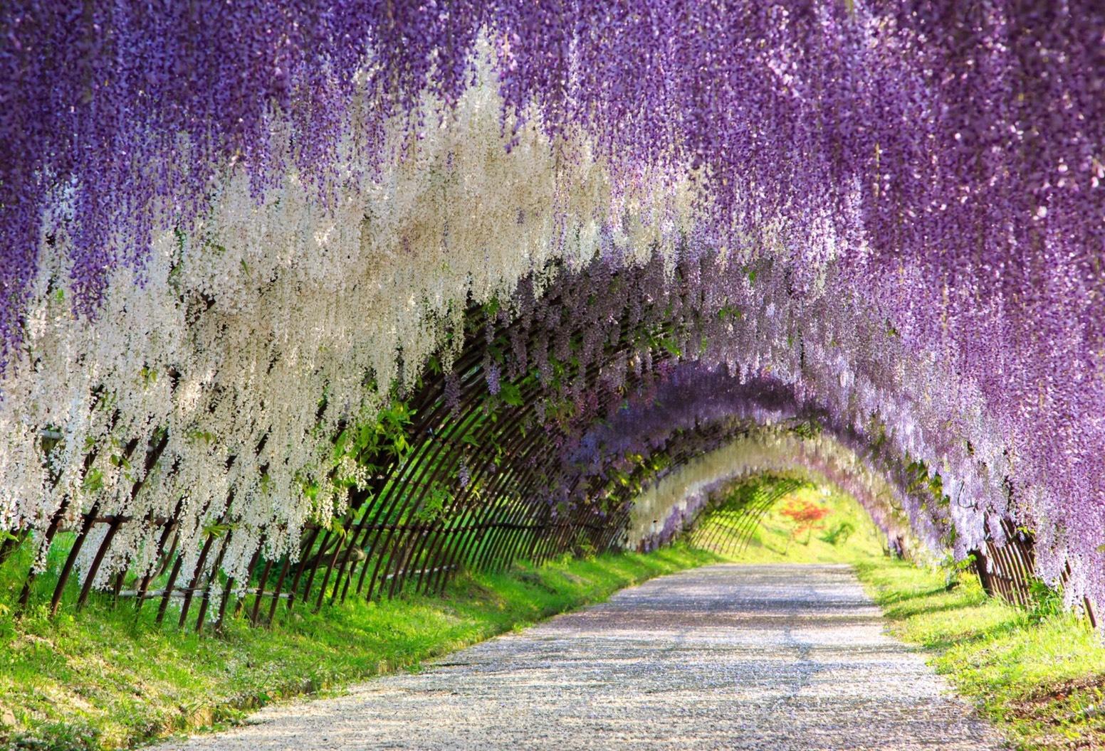 探訪紫色夢幻秘境 (Sponsored)