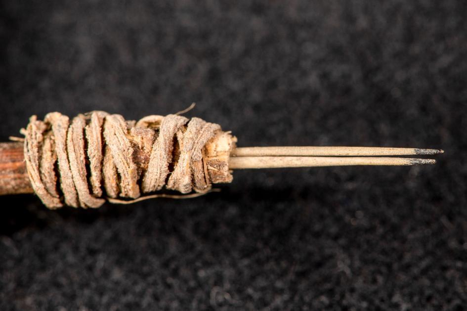 考古學家花了一年確認這束仙人掌刺的用途是刺穿並裝飾人類皮膚。ROBERT HUBNER, WASHINGTON STATE UNIVERSITY