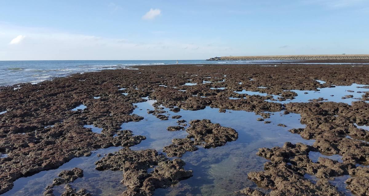 大潭藻礁。 Photograph courtesy of Mission Blue