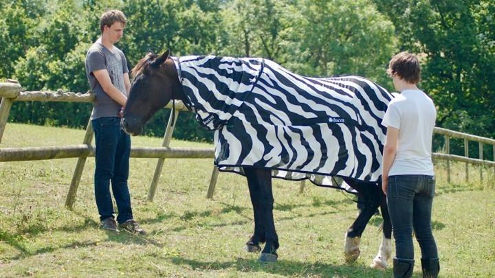 一匹穿著條紋外套的棕馬  | Tim Caro