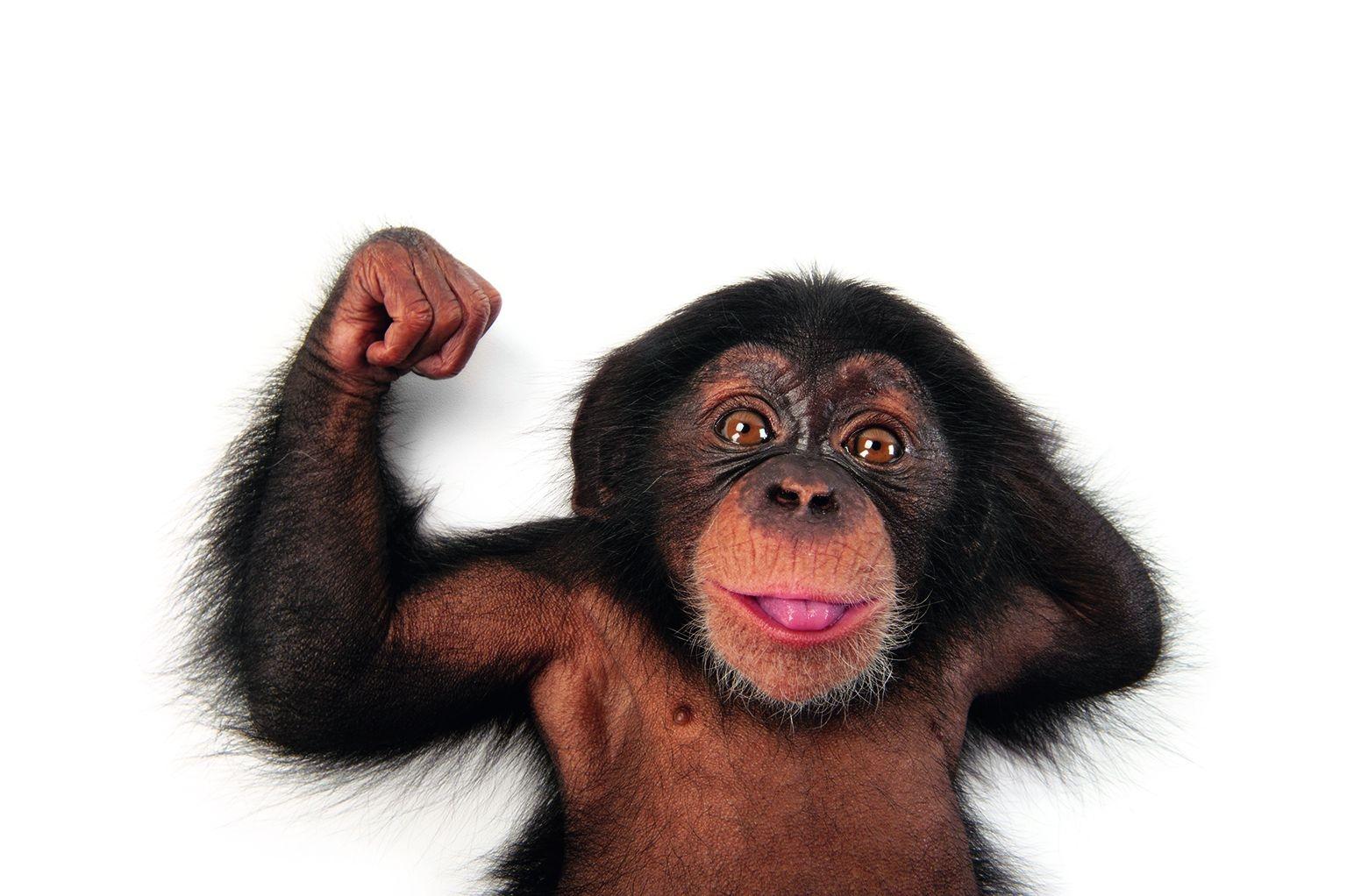 這隻黑猩猩寶寶是在美國坦帕市的勞瑞公園動物園拍攝的。PHOTO: JOEL SARTORE