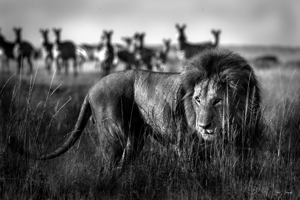 Photograph by Roshan photos, National Geographic Your Shot