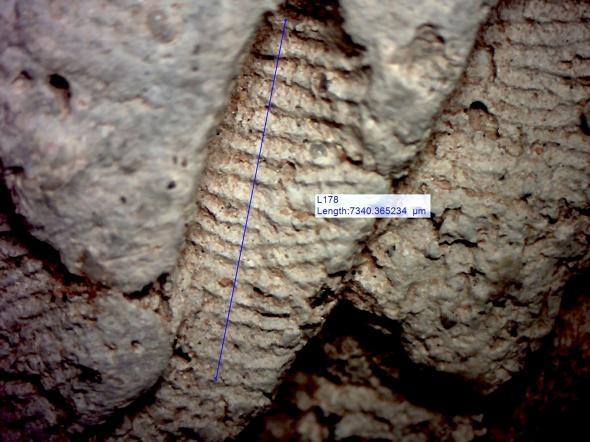 研究人員分析了陶器製作者留在器皿上的指紋紋脊(ridge)寬度;男性的紋脊(本圖)通常比女性(下)來的寬。PHOTOGRAPH BY JOHN KANTNER