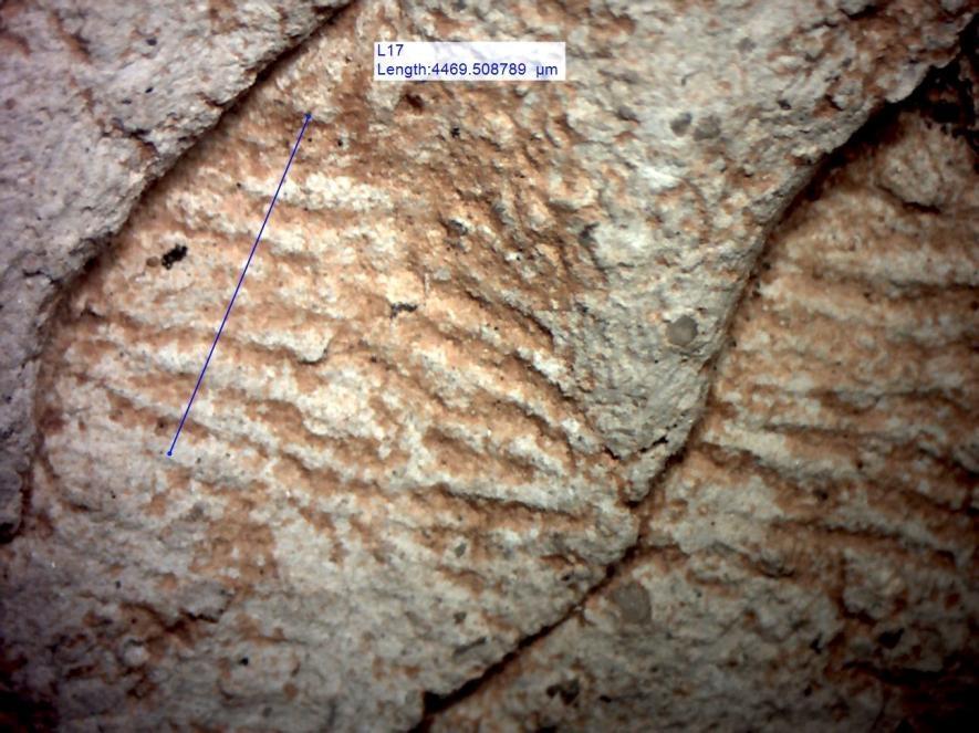 研究人員分析了陶器製作者留在器皿上的指紋紋脊(ridge)寬度;男性的紋脊(上)通常比女性(本圖)來的寬。PHOTOGRAPH BY JOHN KANTNER