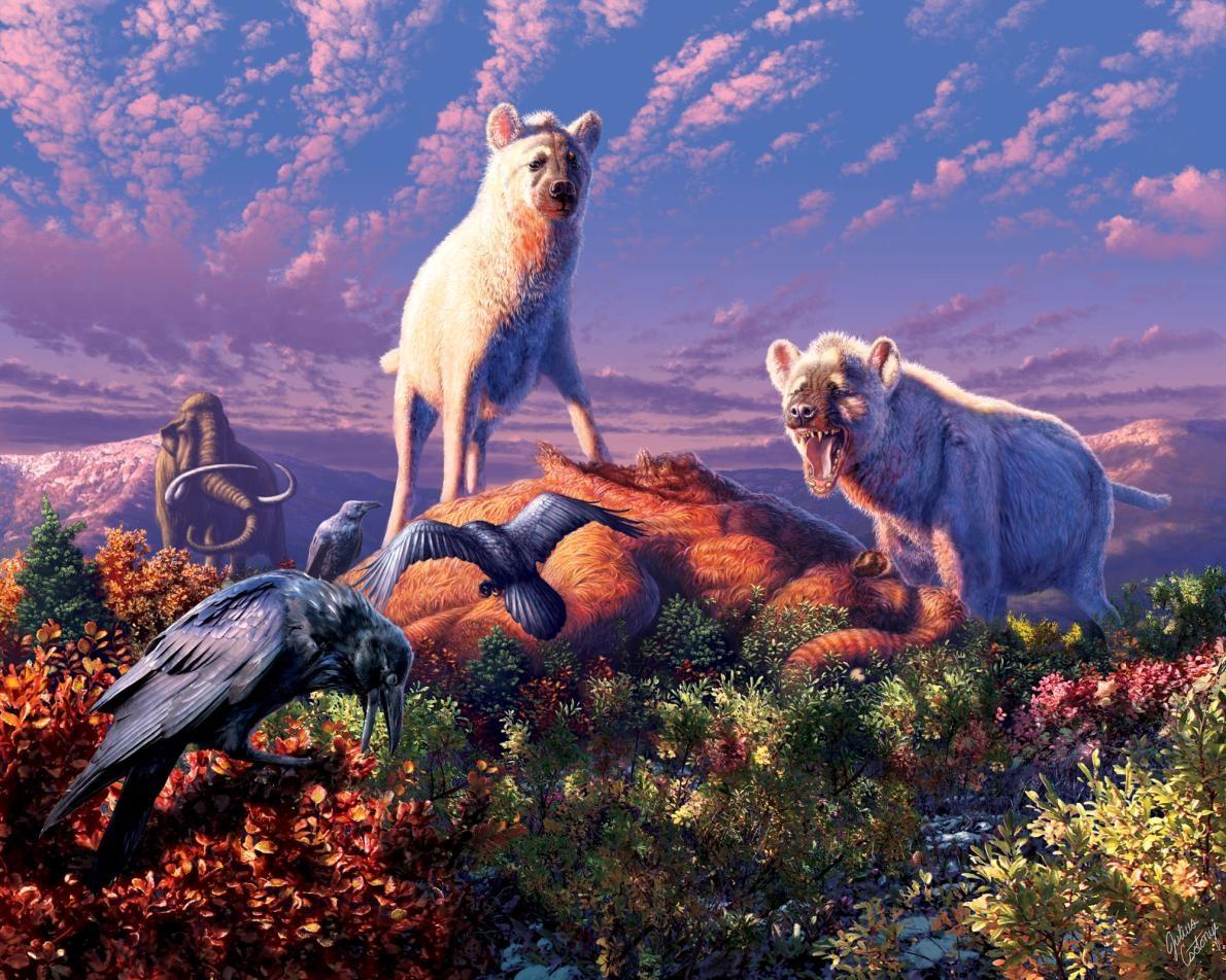 畫中是已滅絕的豹鬣狗( Chasmaporthetes  sp.)。日前北極圈首度發現豹鬣狗的化石,有助於解釋這些在歐亞大陸演化的動物在更新世時如何進入北美洲。ILLUSTRATION BY JULIUS T. CSOTONYI