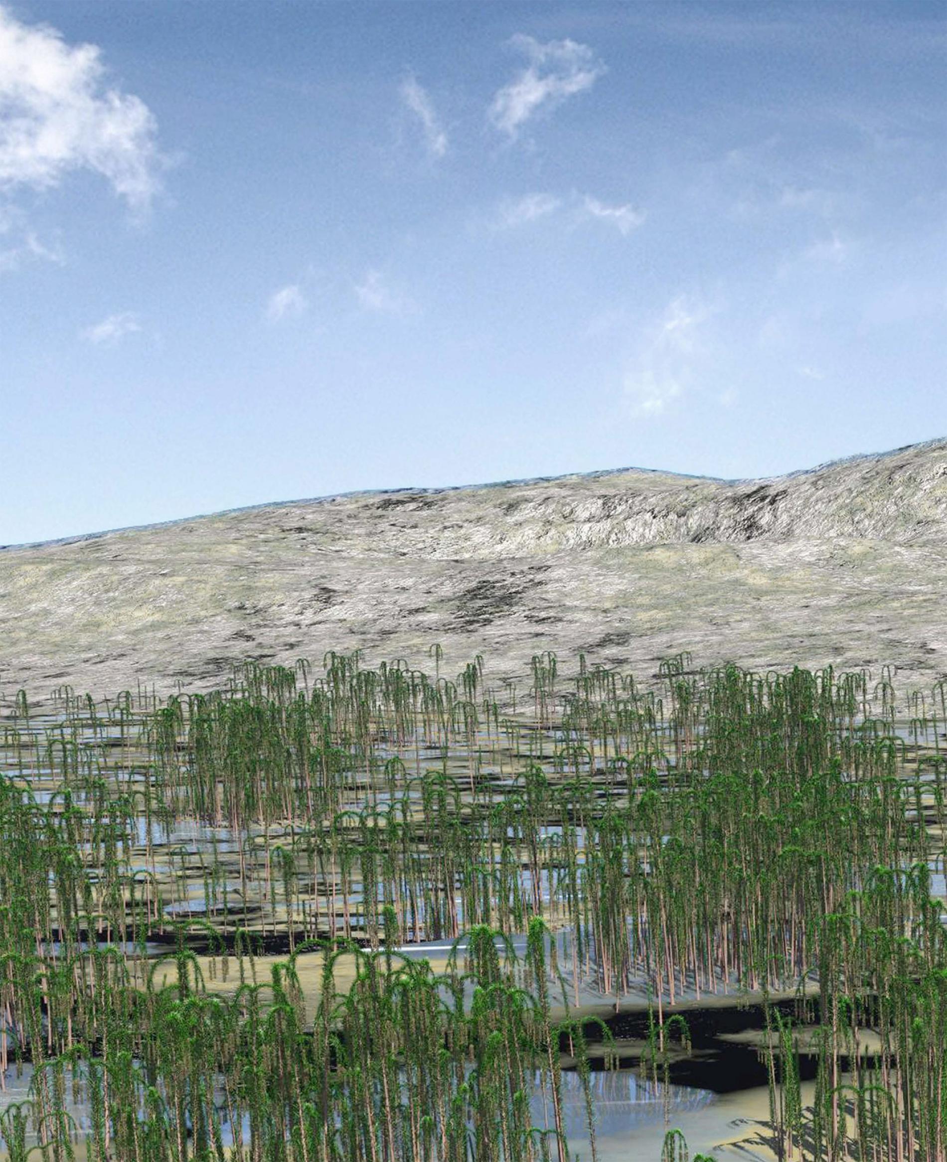 如插圖所示,新杭森林中的矮小樹種可能生活在鄰近海岸的沼澤環境之中。IMAGE BY DEMING WANG