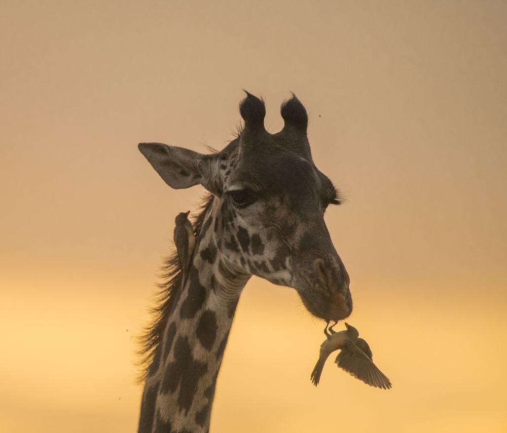 Photograph by Prabhakar Chandrasekaran, National Geographic Your Shot