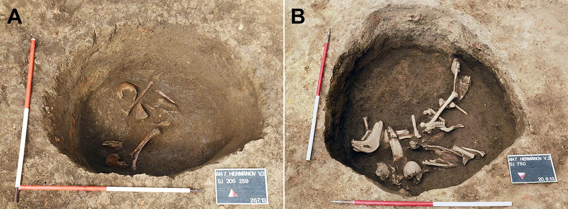 發掘初期的Hermanov vinograd遺址墓葬坑(右側),這個階段出土了動物骨頭,而發掘後期(左側)則發現人類遺骸。PHOTOGRAPH BY M. CAVKA, UNIVERSITY HOSPITAL DUBRAVA, ZAGREB