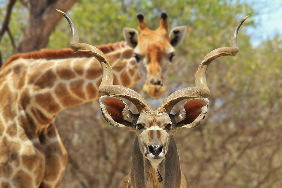 Photograph by Dries Alberts, National Geographic Your Shot