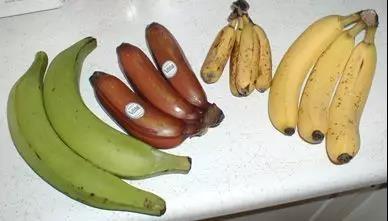 各個品種的香蕉,最右為香芽蕉  Wikimedia Commons