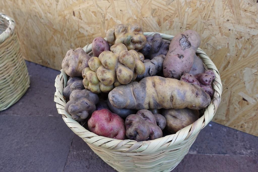 形狀各異的馬鈴薯。圖片來源:Roots, Tubers and Bananas(CC BY 2.0)
