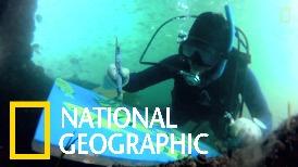 超級短片:水下畢卡索