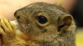 可愛松鼠復健中心