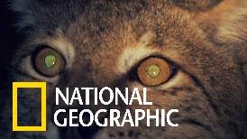 動物熱搜榜:哪些動物具有夜視能力?