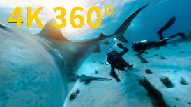 4K 360° VR:在巴哈馬海域與虎鯊相遇