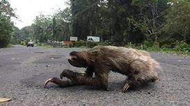 當心樹懶  安心上路