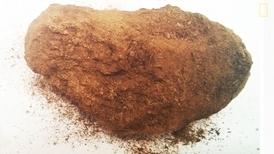 新發現:所羅門寶藏之謎可能得靠驢子糞便中的線索解開?