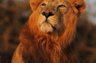 獅子的威儀