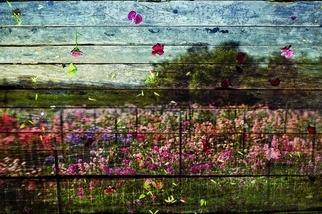 永不凋零的花朵