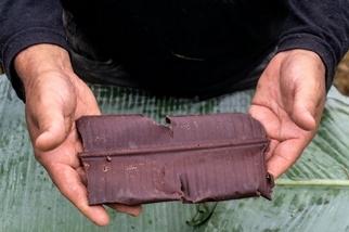 巧克力與雨林共生 亞馬遜部落重返「可可之地」 靠它驅逐非法淘金