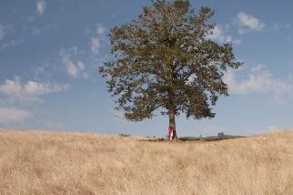 「覺得不被愛的時候,就去抱樹吧」療癒心理學:沒有誰能像它一樣無條件接納