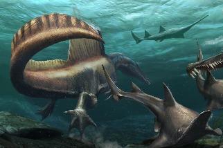 巨大的棘龍比先前認知的更像「水中蛟龍」
