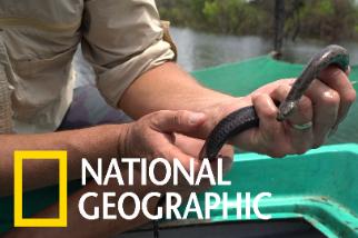 洞里薩湖的水蛇危機