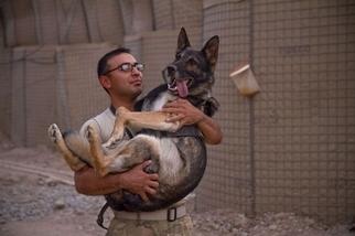 領犬員與工作犬