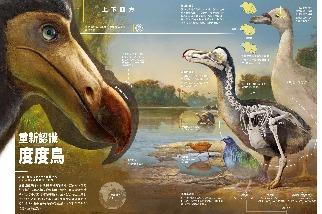 重新認識度度鳥