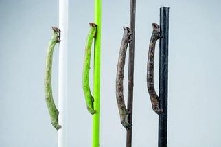 昆蟲如何轉變成牠們看不到的顏色?