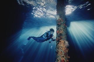 關於恢復力,創紀錄的海洋學家席薇亞.厄爾能教我們什麼?