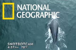 沒錯,空拍機也能收集鯨魚鼻涕!