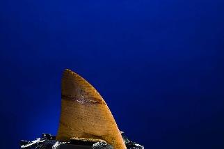 從鯊魚的角度看世界