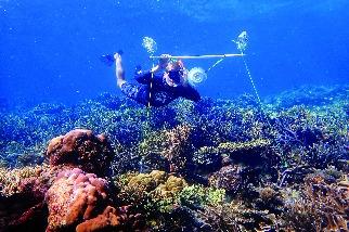 聲音能促進生病的珊瑚礁恢復健康