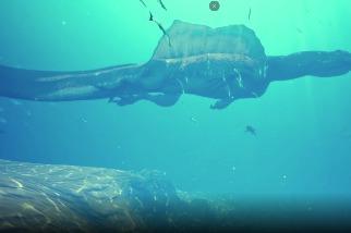 「河中怪獸」棘龍的案情因新發現的牙齒化石而更加明確