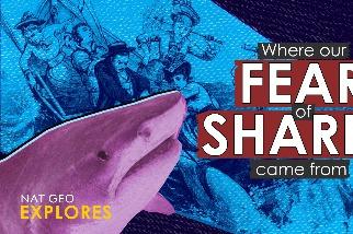 國家地理探索系列:我們為何如此懼怕鯊魚?