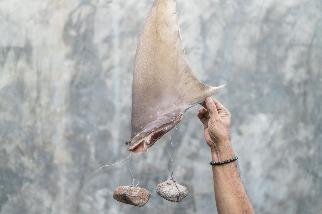 打擊魚翅交易可能比你認為的容易,為什麼?