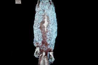 若你覺得鴨嘴獸不夠神奇,現在我們知道牠們也會發光!