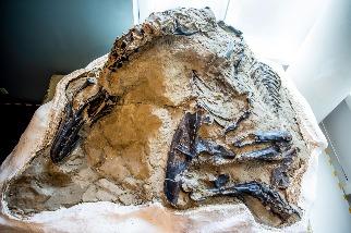 「決鬥恐龍」化石潛藏了14年,現在科學界終於可以一解其奧祕
