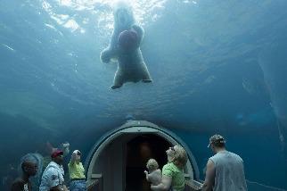 匹茲堡動物園的北極熊