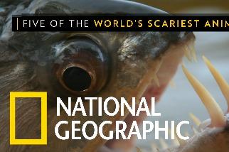 來見見這些自然界中的「小怪物」